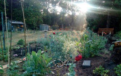 Een groene retraite met een voedend programma